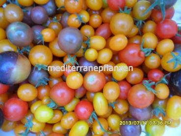 "Hungarian Tomato ""MIX Purple"", organic"