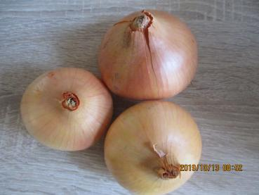 Old Hungarian farmer Giant onions, 100 seeds