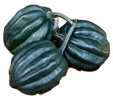 Hungarian Tuffy squash, easy to growing, organic from our farm, 5 seeds