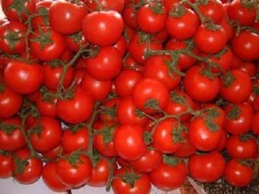 Bulgarische gelbe Tomaten Saatgut 10 Samen