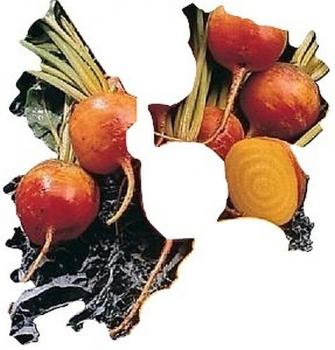 Golden beets, 20 seeds