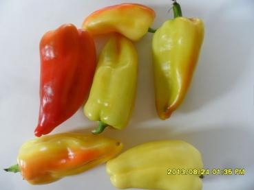 Hungarian sweet pepper for cooking, BIO hu-öko-01