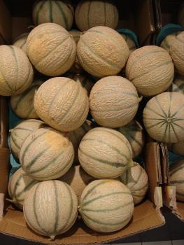 Cantaloupe Melone, Delice de la Table, 10 seeds