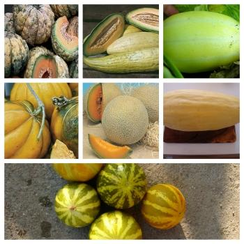 popular melons:8 vartieties, 80 seeds, separately packed