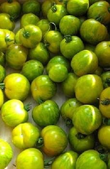 "Hungarian Tomatoe ""Mini yellow Zebra"", for colourful salads"