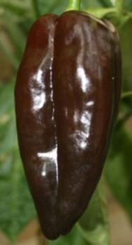 "Hungarian  medium hot pepper ""Mulato Isleno"", hu-öko-01"
