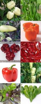 Historical Hungarian pepper, 10 different verieties separately packed, 100 seeds, BIO hu-öko-01