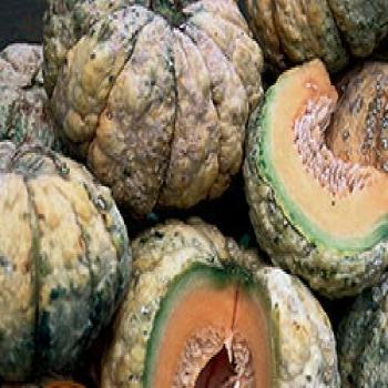 Prescott Fond, very sweet flavour, melon for eating or just touching, 10 seeds