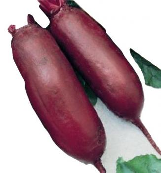 Old Hungarian Giant red beets from our farm, 100 seeds
