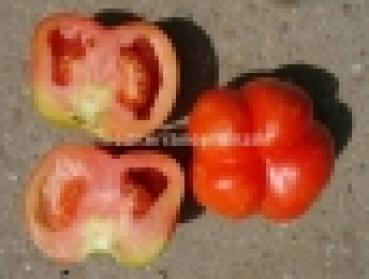 "Hungarian Tomato ""Stripped Cavern"", organic"