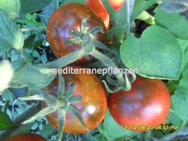 ungarische samen tomaten kumato ertragreiche legend re. Black Bedroom Furniture Sets. Home Design Ideas