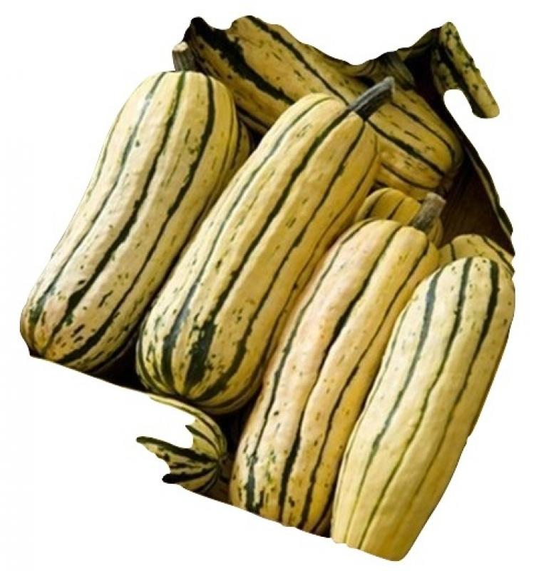 Hungarian Delicata squash, very sweet fruits, organic from our farm, 5 seeds
