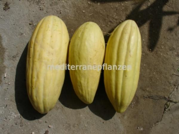 Hungarian banana melon, very long fruits