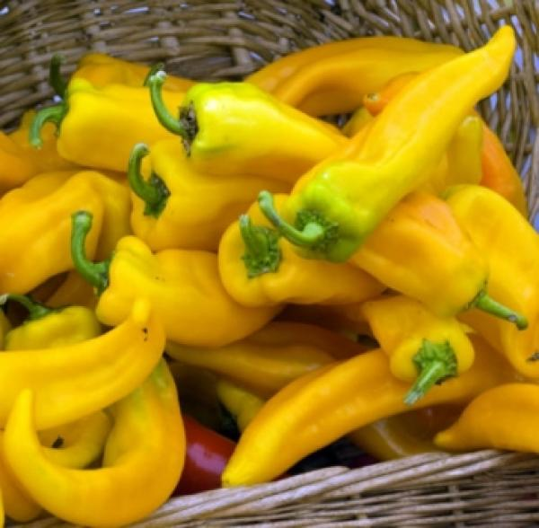 "Hungarian  Pepper ""HOT yellow"", organic, Bio hu-öko-01"