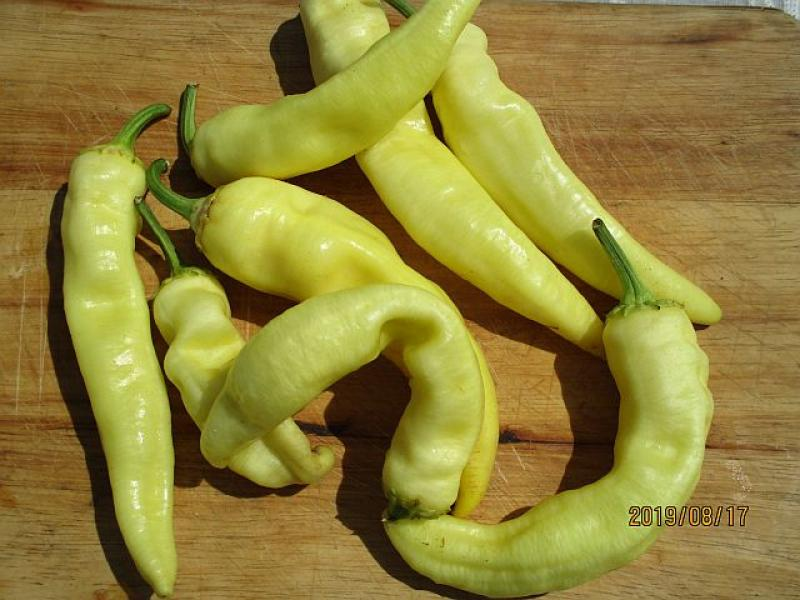 Hungarian long yellow sweet paprika for BBQ, Bio hu-öko-01