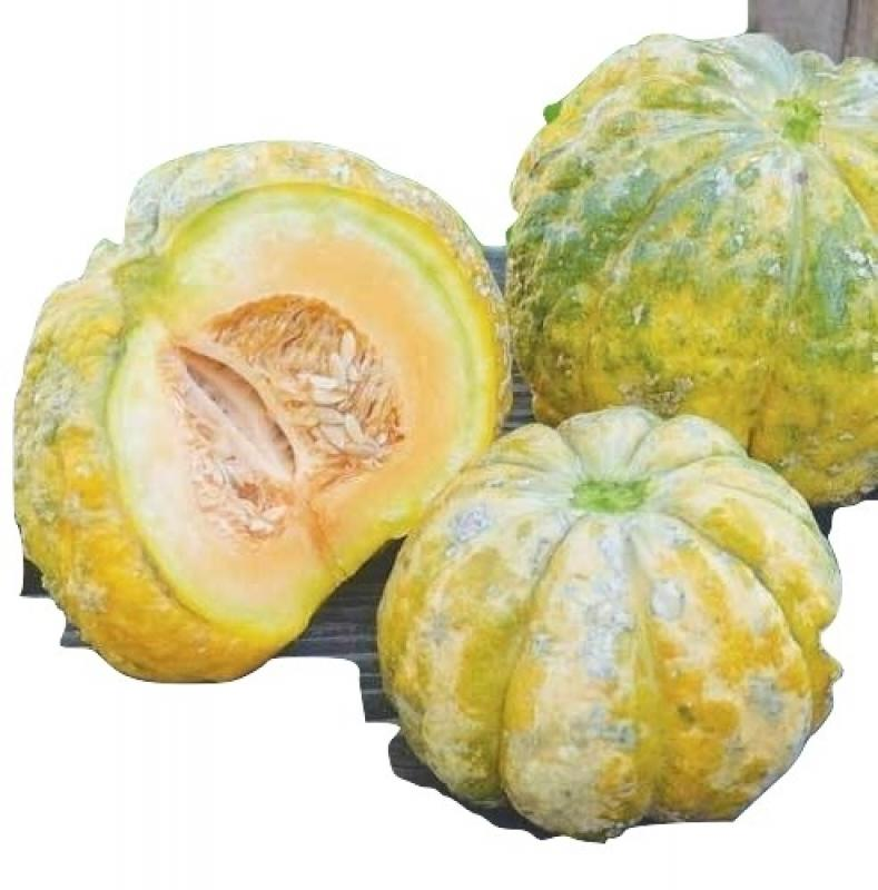 Prescott Fond WHITE, very sweet flavour, melon for eating or just touching, 10 seeds